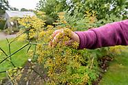 Endelave - Medicinal Herb Garden (Lægeurtehaven)
