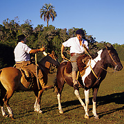 South America, Uruguay, Florida, An authentic gauchos on a working ranch.