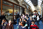 The Natural History Museum, London. Visiting children in the Mammals gallery.