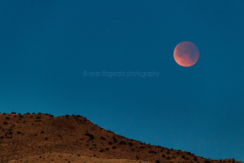 """""""Super Blue Blood Moon"""" and sotol in Animas Creek, Ladder Ranch, west of Truth or Consequences, New Mexico, USA."""