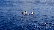 Spinner Dolphins, Windward Coast,  Oahu, Hawaii