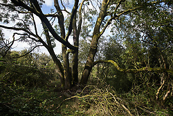 Calvert, UK. 27 July, 2020. A large tree at Calvert Jubilee Nature Reserve. On 22nd July, the Berks, Bucks and Oxon Wildlife Trust (BBOWT) reported that it had been informed of HS2's intention to take possession of part of Calvert Jubilee nature reserve, which is home to bittern, breeding tern and some of the UK's rarest butterflies, on 28th July to undertake unspecified clearance works in connection with the high-speed rail link.