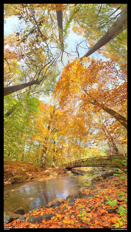 Panoramic Photograph of Sligo Creek Park, Takoma Park, MD.  Print Size (in inches): 8x15; 13x24; 20x36 48x27; 34x60; 41x72