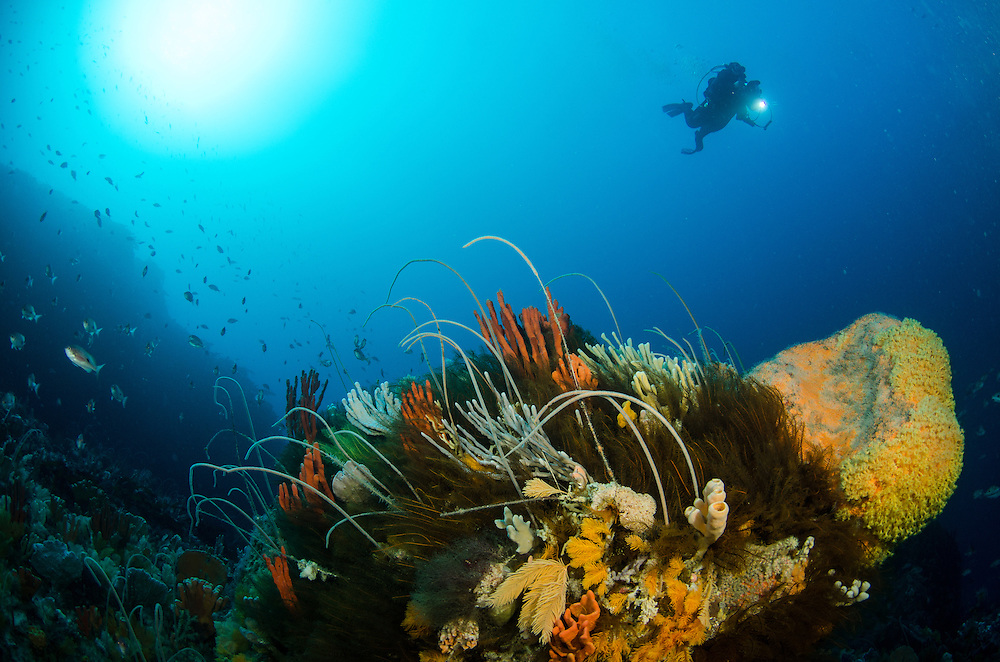 Deep Reef, Bicheno, Tasmania