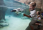 8/27/09  Pittsburgh, PA.  Penguin exhibit at National Aviary, designed by PGAV.<br /> <br /> Photo by Michael A. Schwarz