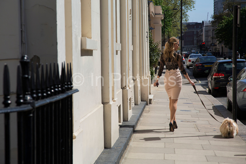 Expensively dressed woman in high heels walking her dog in Belgravia. In a selected few boroughs of West London, wealth has changed over the last couple of decades. Traditionally wealthy parts of town, have developed into new affluent playgrounds of the super rich. With influxes of foreign money in particular from the Middle-East. The UK capital is home to more multimillionaires than any other city in the world according to recent figures. Boasting a staggering 4,224 'ultra-high net worth' residents - people with a net worth of more than $30million, or £19.2million.. London, England, UK.