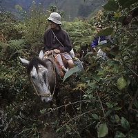 Horse packing in cloud forest above Mangalpa.