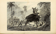 The Tiger Hunt From the book ' The Oriental annual, or, Scenes in India ' by the Rev. Hobart Caunter Published by Edward Bull, London 1836 engravings from drawings by William Daniell