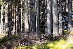 THEMENBILD - Baumstämme von Fichten wachsen aus einem mit Moos bedeckten Waldboden. Kals am Samstag 10. Oktober 2020 // Spruce trunks grow on a forest floor overgrown with moss. Kals on Saturday, October 10, 2020. EXPA Pictures © 2020, PhotoCredit: EXPA/ Johann Groder