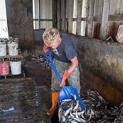 Carl Pottle fills buckets with bait at Great Wass Lobster in Beals, Maine.