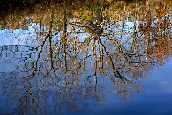 Stock photo of a reflection of a tree line in a quiet pond