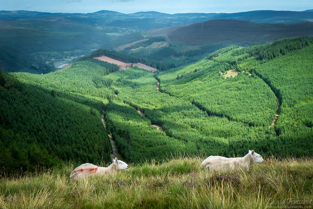 Overview of Glendalough from Ouest mountain looking Est.<br /> Picture taken on top of the hills of the Glendalough Valley that is located in the Wicklow Mountains National Park. Many sheeps can be encountered on these hills.