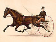 Johnston The Champion Pacer 1889 Driven by P. V, Johnston