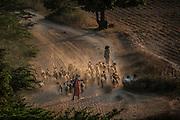Goat shepherd Photographed in Myanmar