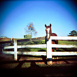 Images from the Keswick Stables horse farm outside of Charlottesville, Virginia. Images include the living room, exterior of the house, and a horse in the paddock...Photo by Susana Raab
