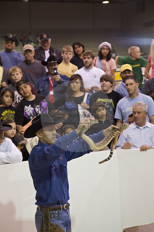 Sweetwater, TX - March 15:  A Jaycee snake volunteer holds up a record western diamondback rattlesnake measured at 66-inches during the 51st Annual Sweetwater Texas Rattlesnake Round-Up ,  March 15, 2009 in Sweetwater, TX. During the three-day event approximately 10,000 rattlesnakes will be collected, milked and served to support charity.