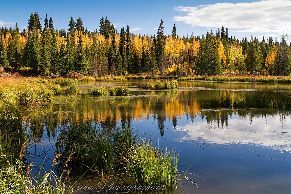 Autumn reflections on a small mountain pond near Rabit Ears Pass, Colorado.