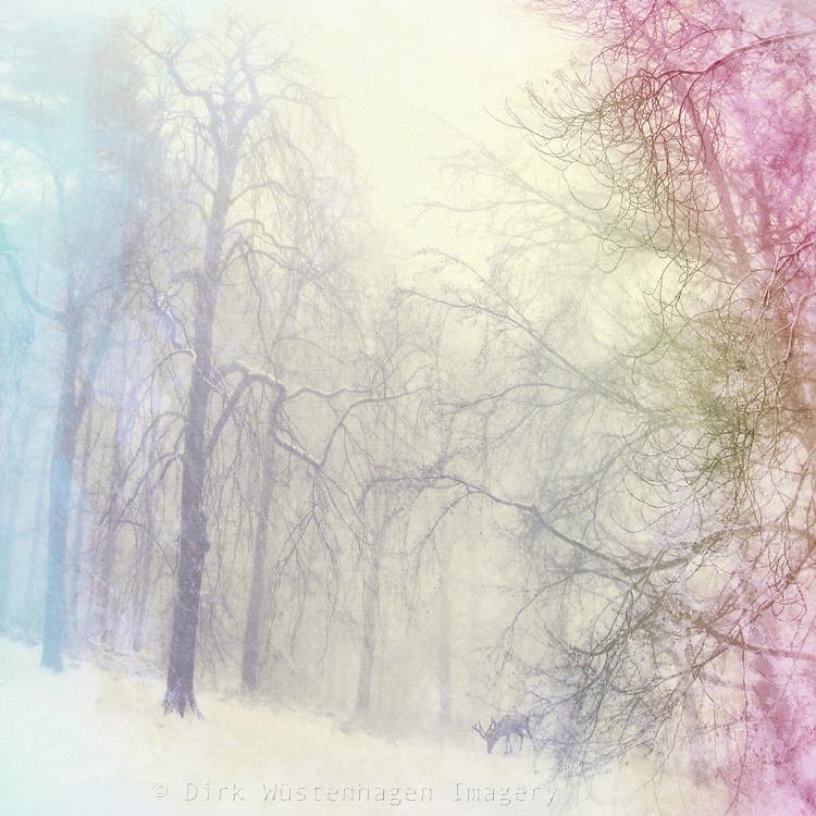Idyllic Winter scenery  with deer.<br /> Manipulated photograph.<br /> Prints: http://society6.com/DirkWuestenhagenImagery/Winter-IS-Coming-Tsj_Print