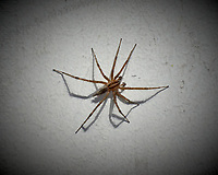 Spider. Image taken with a Leica T camera and 55-135 mm lens (ISO 500, 135 mm, f/4.4, 1/125 sec).