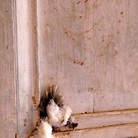 Central America, Cuba, Trinidad. Sacrifical offerings on door to Casa Templo de Santería Yemayá, a Santeria Church.