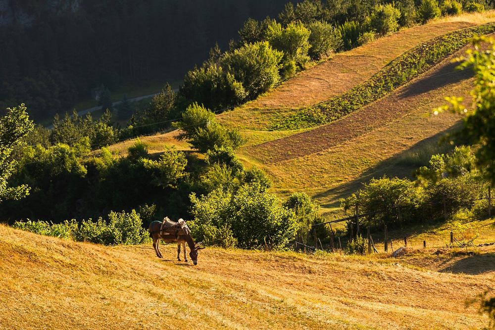 Curvy rhodopean fields