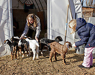 Cornwall, New York  - A young girl, at right, feeds a baby dairy goat while another girl keeps other baby goats out of the barn at Edgwick Farm on Feb. 4, 2012. ©Tom Bushey / The Image Works