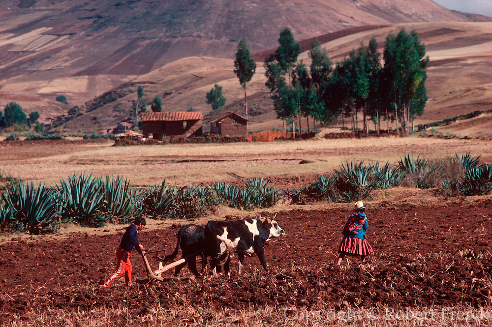 PERU, HIGHLANDS farmers using a traditional oxen team to  pull a plow in their fields near Cuzco in  the Cordillera de Urubamba