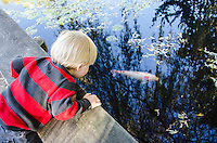 Toddler boy looking over edge and watching koi fish in pond in Vancouver, Canada.