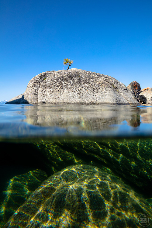 """""""Bonsai Tree on Lake Tahoe Boulder 5"""" - Photograph of a bonsai like tree on a boulder near State Line Point in Crystal Bay, Lake Tahoe. Over-under photo where half the lens is under water, shot from a kayak in the morning."""