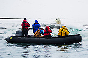 A zodiac filled with tourists photographing a polar bear (Ursus maritimus)  ,Svalbard, Norway