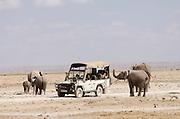 Herd of African Elephants around a safari vehicle, Amboseli National Park, Kenya