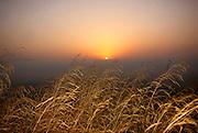Israel, Hula Valley, the sun seen through swamp plants at dawn
