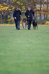 © Licensed to London News Pictures . 13/11/2012 . Manchester , UK . Adey Jones with 7 month old German Shepherd , Archie (left) and Joe Flood with 18 month old Rottweiler , Buster (right) . Specialist handlers from Greater Manchester Police put police dogs through their paces at a training event . Greater Manchester Police are appealing for members of the public to donate unwanted dogs to the force . Photo credit : Joel Goodman/LNP