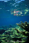 snorkeler over reef of elkhorn coral, Acropora palmata<br /> ( Threatened Species ), Berry Islands, Bahamas<br /> ( Western Atlantic Ocean )  MR 115