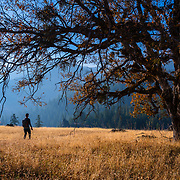 The open oak savannah that clings to the sides of the Eel River canyons is like paradise for me. Open views, surrounded by lush forest, and in the company of California's soulful and omnipresent oaks.