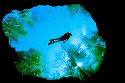 scuba diver, Devils Eye Spring, Ginnie Springs, High Springs, Florida, MR