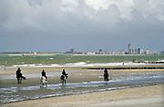 Nederland, Breskens, 15-9-2019  De stad aan de schelde is een vissersplaats een toeristische hotspot voor zeeland ..Foto: ANP/ Hollandse Hoogte/ Flip Franssen