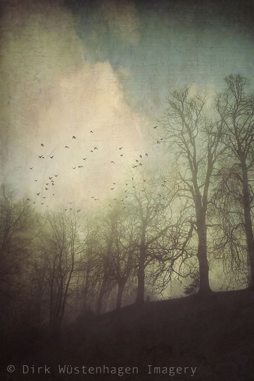 Tree silhouettes and a flock of birds above a hill - photograph processed with texture overlays