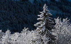 15.12.2017, Gross Titlis Schanze, Engelberg, SUI, FIS Weltcup Ski Sprung, Engelberg, im Bild mit Schnee bedeckte Bäume // trees covered with snow before Mens FIS Skijumping World Cup at the Gross Titlis Schanze in Engelberg, Switzerland on 2017/12/15. EXPA Pictures © 2017, PhotoCredit: EXPA/JFK