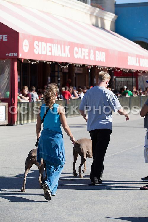 Couple Walking their Dogs on the Boardwalk in Venice Beach California