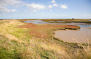 Mudflats and saltings vegetation on the tidal River Ore behind Orford ness shingle spit, Suffolk, England