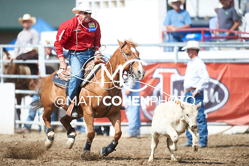 Tie-down roper Mike Johnson of Henryetta, OK competes at the Redding Rodeo in Redding, CA.<br /> <br /> <br /> UNEDITED LOW-RES PREVIEW<br /> <br /> <br /> File shown may be an unedited low resolution version used as a proof only. All prints are 100% guaranteed for quality. Sizes 8x10+ come with a version for personal social media. I am currently not selling downloads for commercial/brand use.