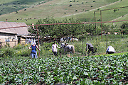 Farmers plough their field with a horse drawn hand plough. Photographed in Armenia