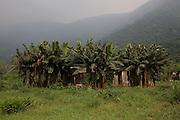 A house surrounded by banana plants in Jardim São Marcos favela, Cubatão