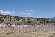 Field of flags in Questa, New Mexico