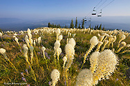 Beargrass on the slopes below Chairlift at Whitefish Mountain Resort in Whitefish, Montana