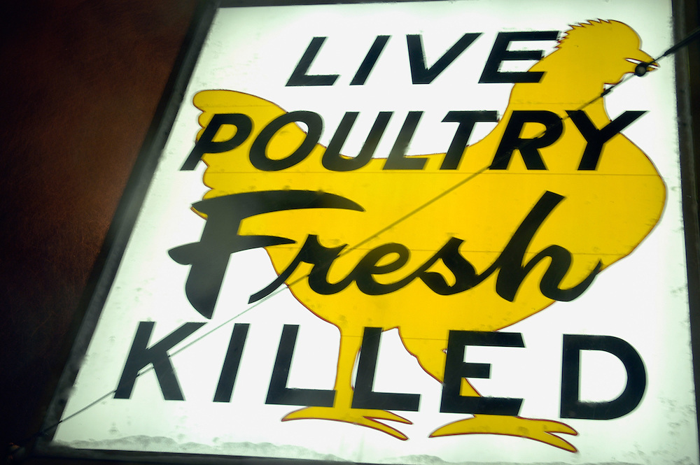 The famous Live Poultry Fresh Killed sign over Mayflower Poultry in East Cambridge, MA.