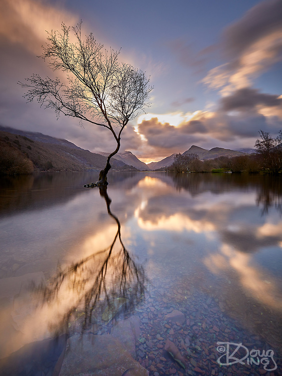 Lonely tree reflected in the waters of Lyn Padarn with the sun rising in the notch of the Llanberis Pass the morning after Storm Freya