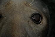 Shetland Seals in Lerwick