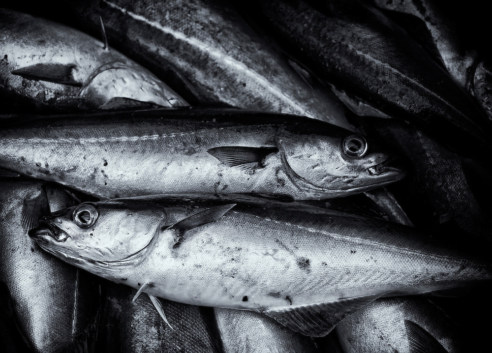 Norway - Cod fishes